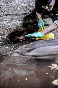 Live dolphin washes up on north oregon coast Depoe bay aquarium