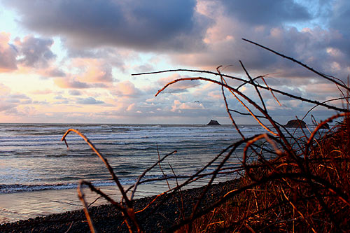 Five Funky Facts About Oregon Coast Spring Break You Didn't Know