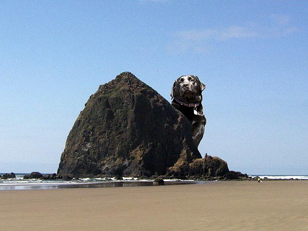 Dog Friendly Restaurants In Cannon Beach Oregon