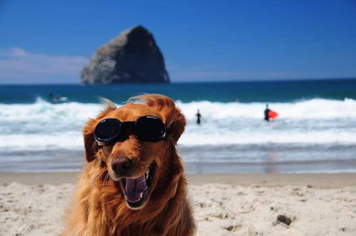 Doggy Fest and Kite Fest Greet N. Oregon Coast Visitors