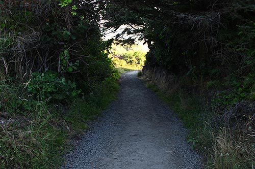 Secret Trail In Nw Lincoln City Oregon Virtual Tour