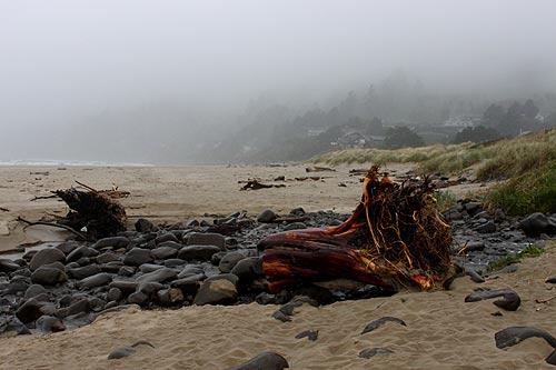 A Look At Oregon Coast Marine Debris King Tides