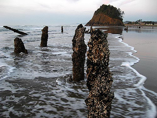 Oregon coast stumps of mystery neskowin 39 s ghost forest for Neskowin beach