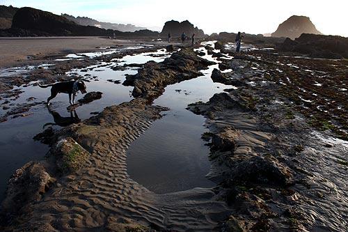 strange oregon coast history legend of seal rock sea monsters