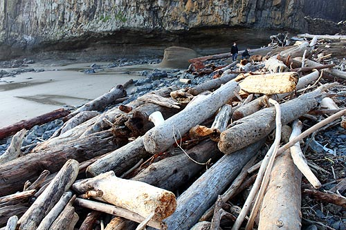 Seal Rock State Recreational Site log bundles