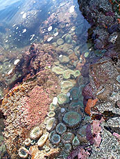 Oregon Coast Tide Pools The Complete Guide