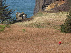 click here to see more of the Manzanita-area hidden cliffs
