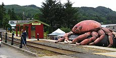 Crabbing on the oregon coast dugneness crab and red rock crab